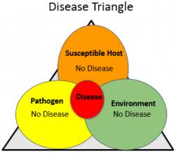 Disease Triange